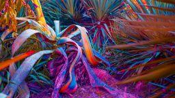 """""""Визуален учен"""" създава снимки на  уникални тропически растения"""