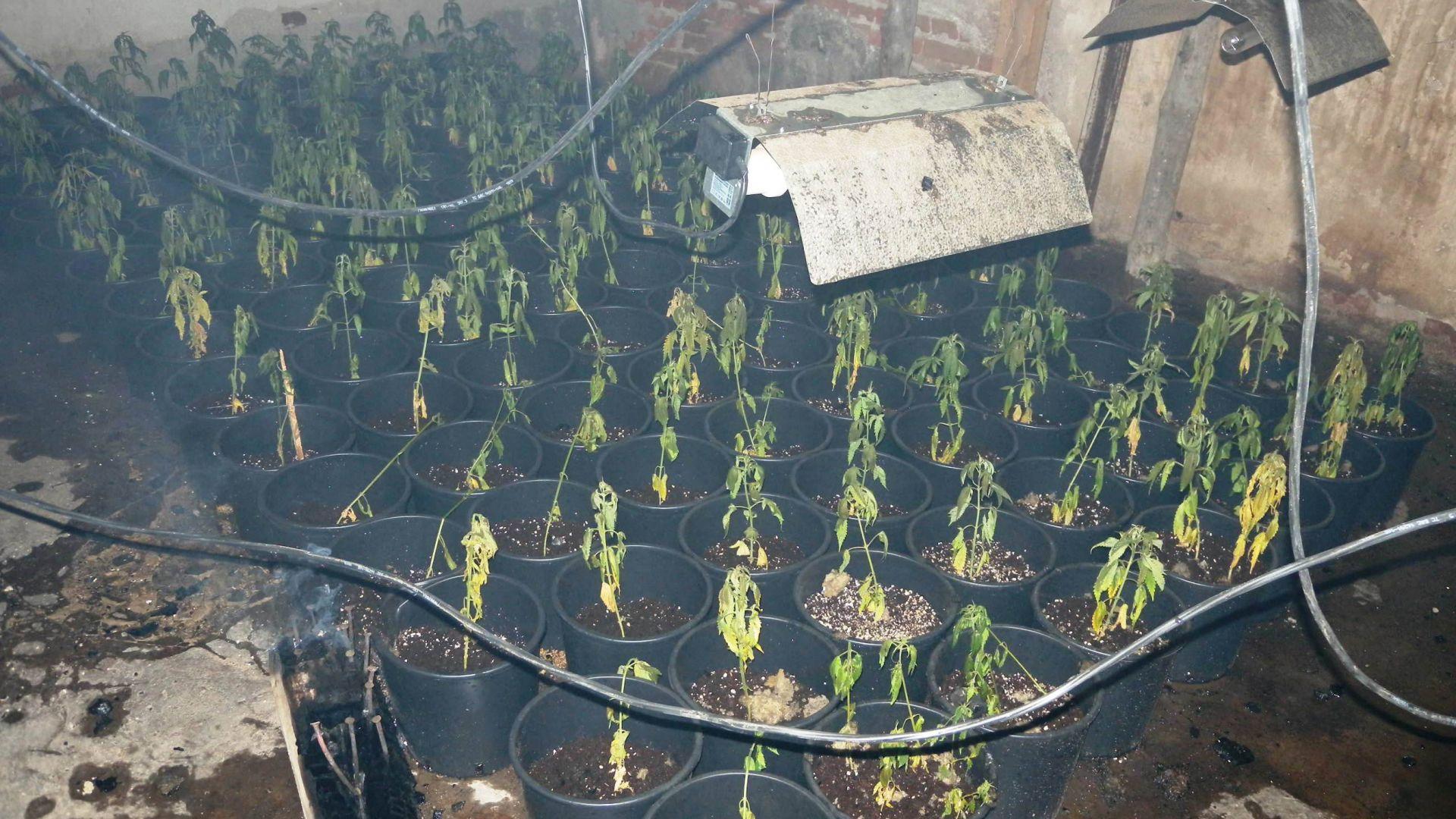 Откриха наркооранжерия, маскирана като дърводелски цех