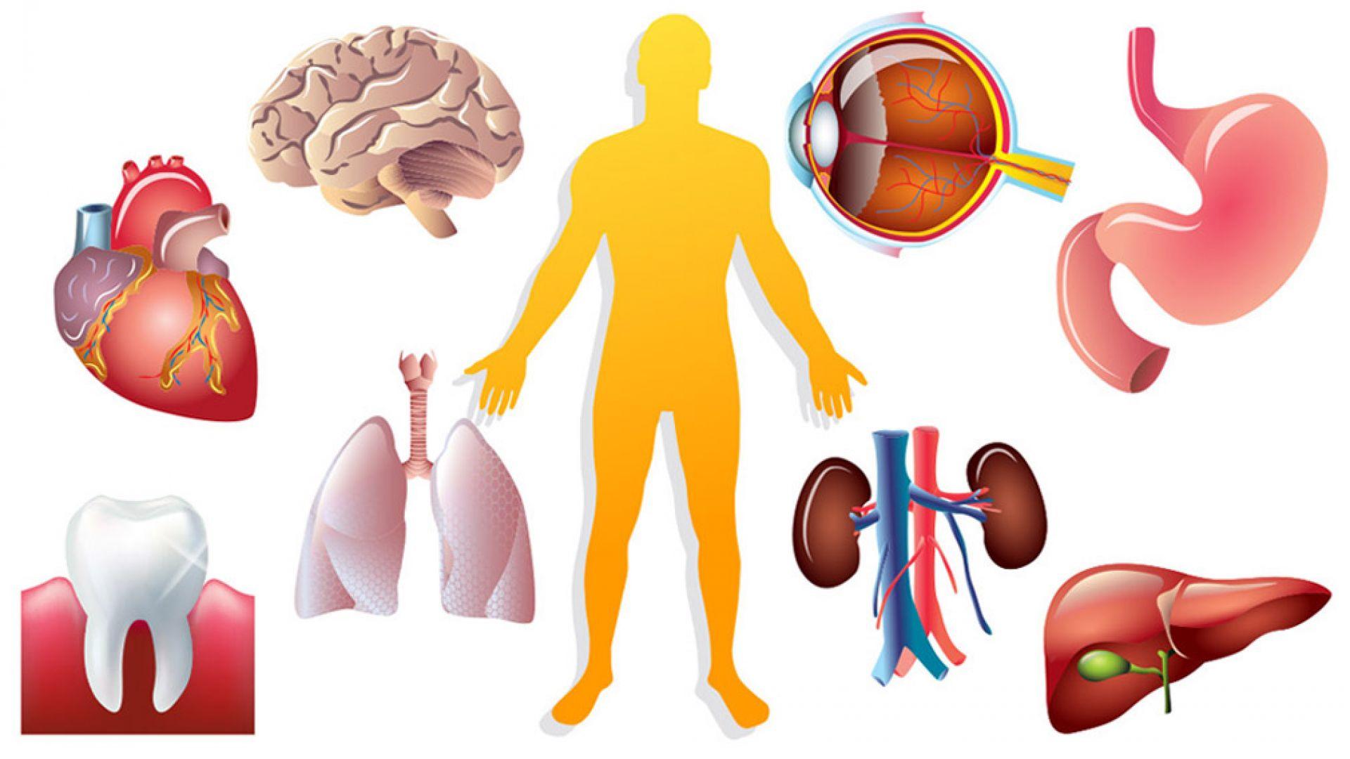 Лекарите: Как да се опазим от болестите?