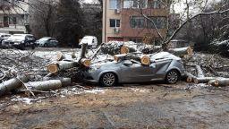 40-годишна топола помля кола в Пловдив (снимки)