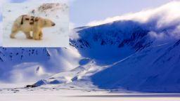 Руските власти издирват кой е боядисал полярна мечка с черен спрей (видео)