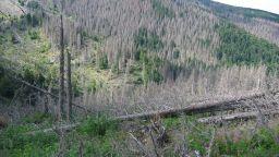 Дарителска кампания за опазването на витошките гори