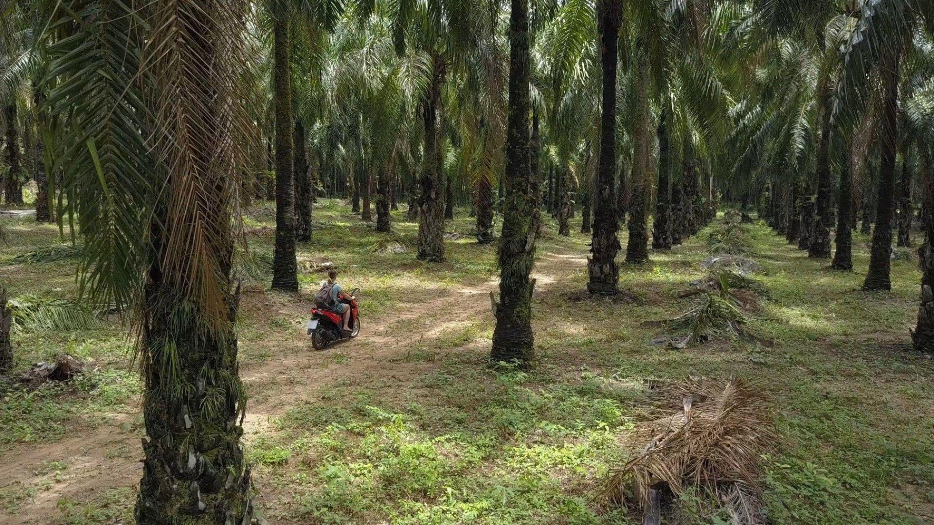 """Водещият производител Сингапур превключва на """"зелено"""" палмово масло"""