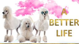 """""""A Better Life"""" на Ива Свещарова, Вили Прагер и Мартин Щиферман - първо в София"""