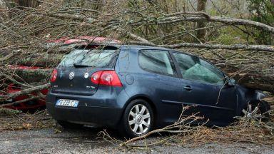 Силна буря в Югозападна Франция изкорени дървета, уби шофьор (снимки)
