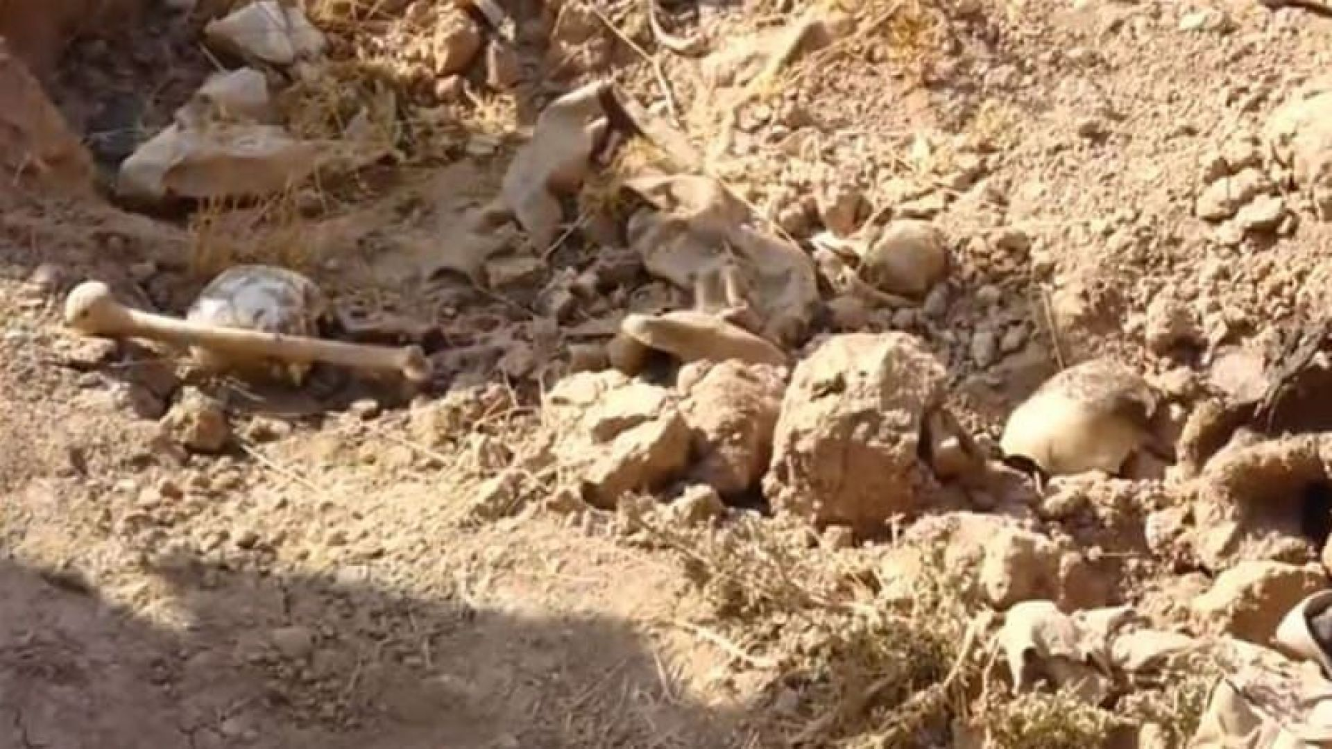 Масов гроб с телата на 643 мирни жители е бил