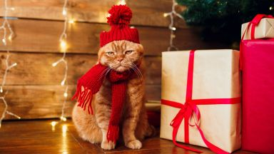 Ветеринари: Не обличайте котките си със смешни костюми и шапки по празниците