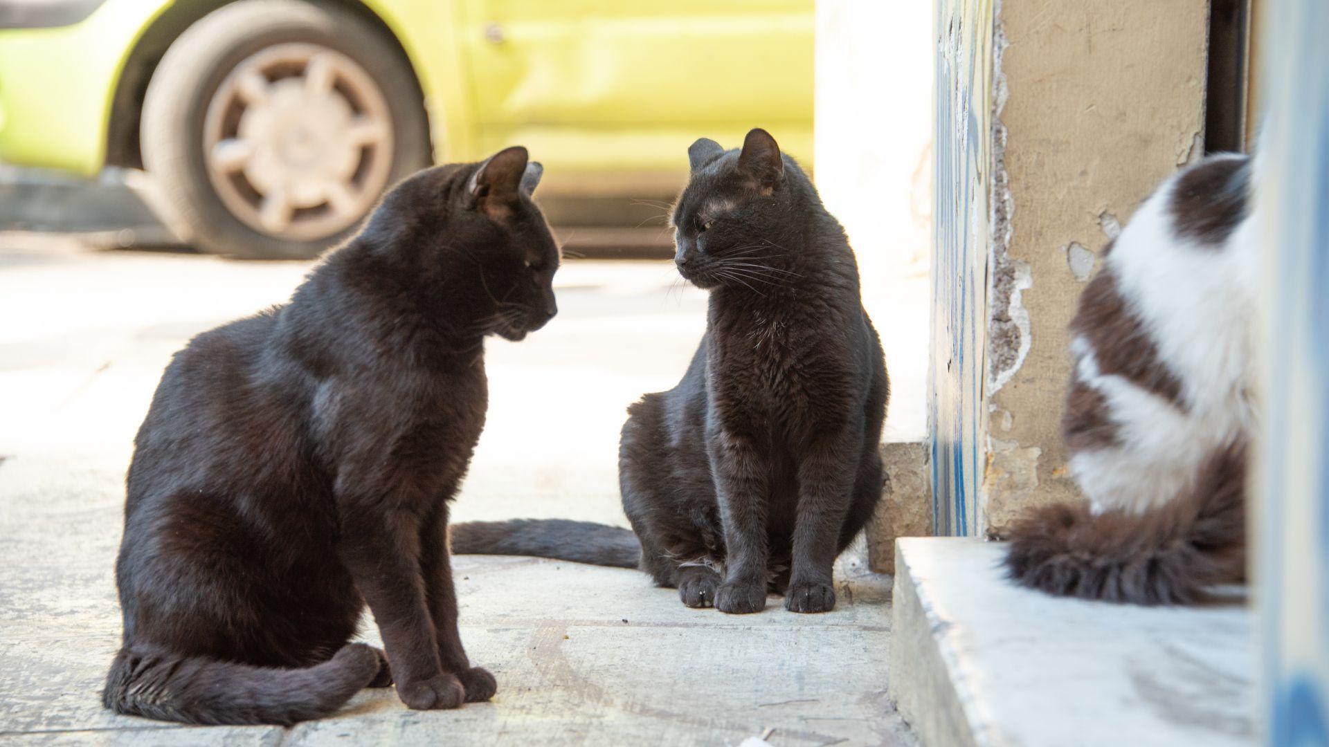 Разследват убийствата на 100 котки за месец в Бургас