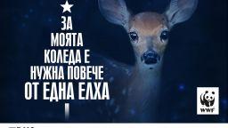 За Коледа WWF си пожелава още повече истински гори