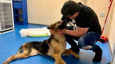Радо от Doghelp: За последната година сме спасили, излекували и намерили дом на над 300 животни