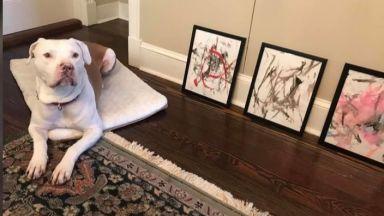 Картини, нарисувани от куче, бяха продадени за 4000 долара