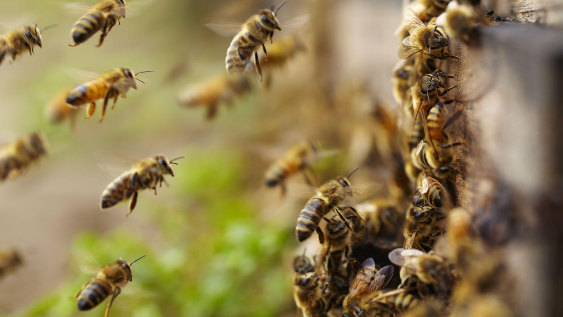 За гарантиране на мерките по опазване на пчелите и установяване
