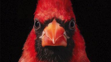 Птиците с човешки лица и характери във фотографиите на Тим Флач