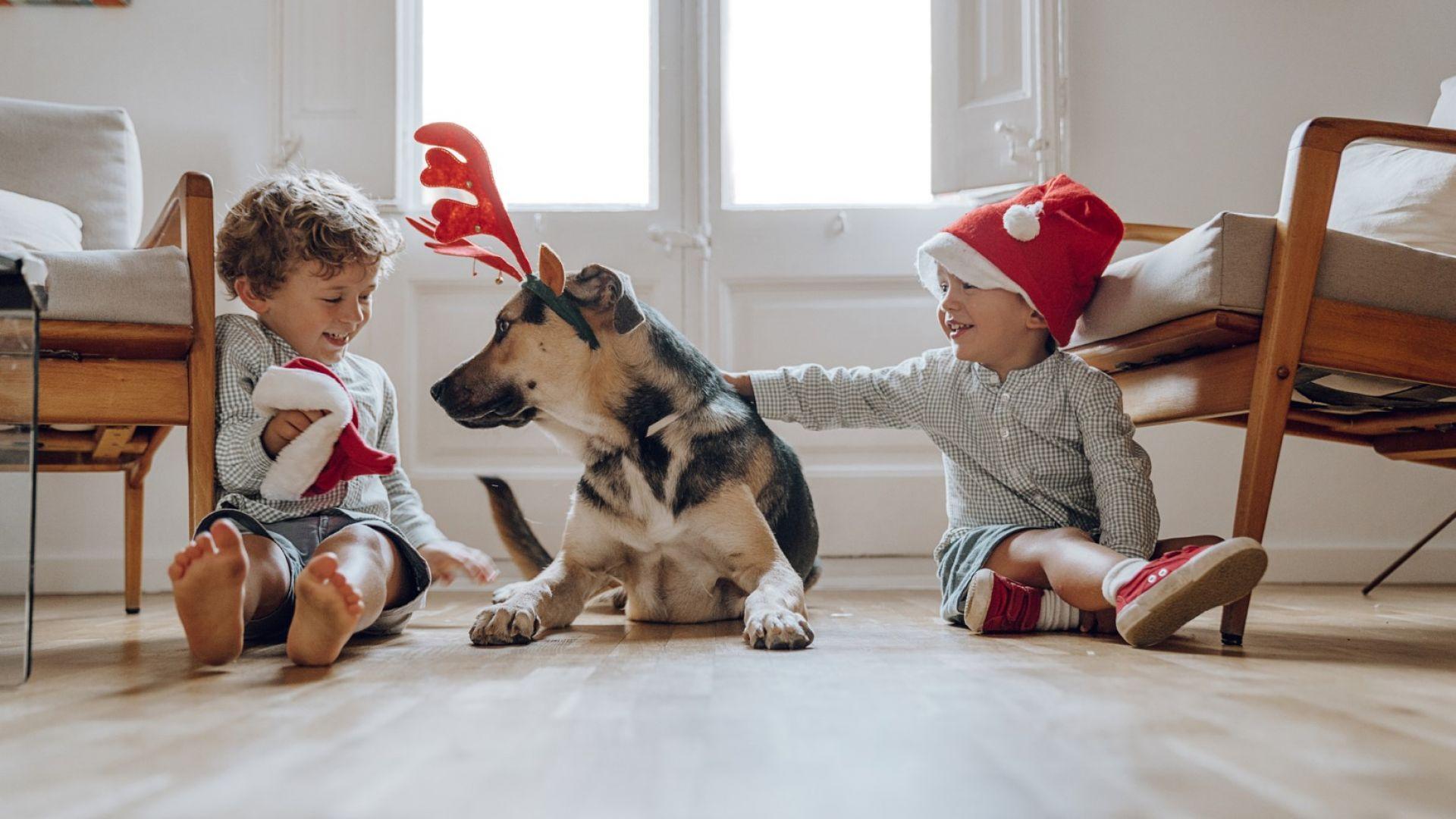 4 + 1 причини да осиновиш непородисто животно