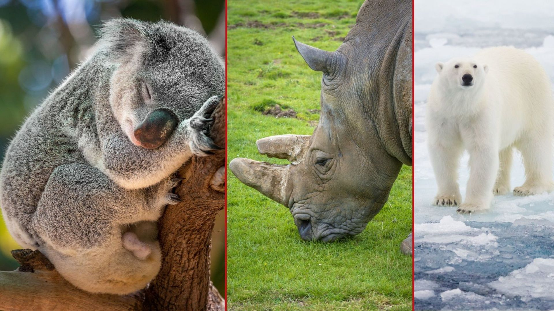 Животните, които измират