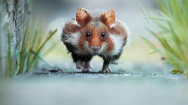 Фотограф улавя малките вълшебни мигове в природата