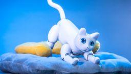 Компания предлага роботизирано коте
