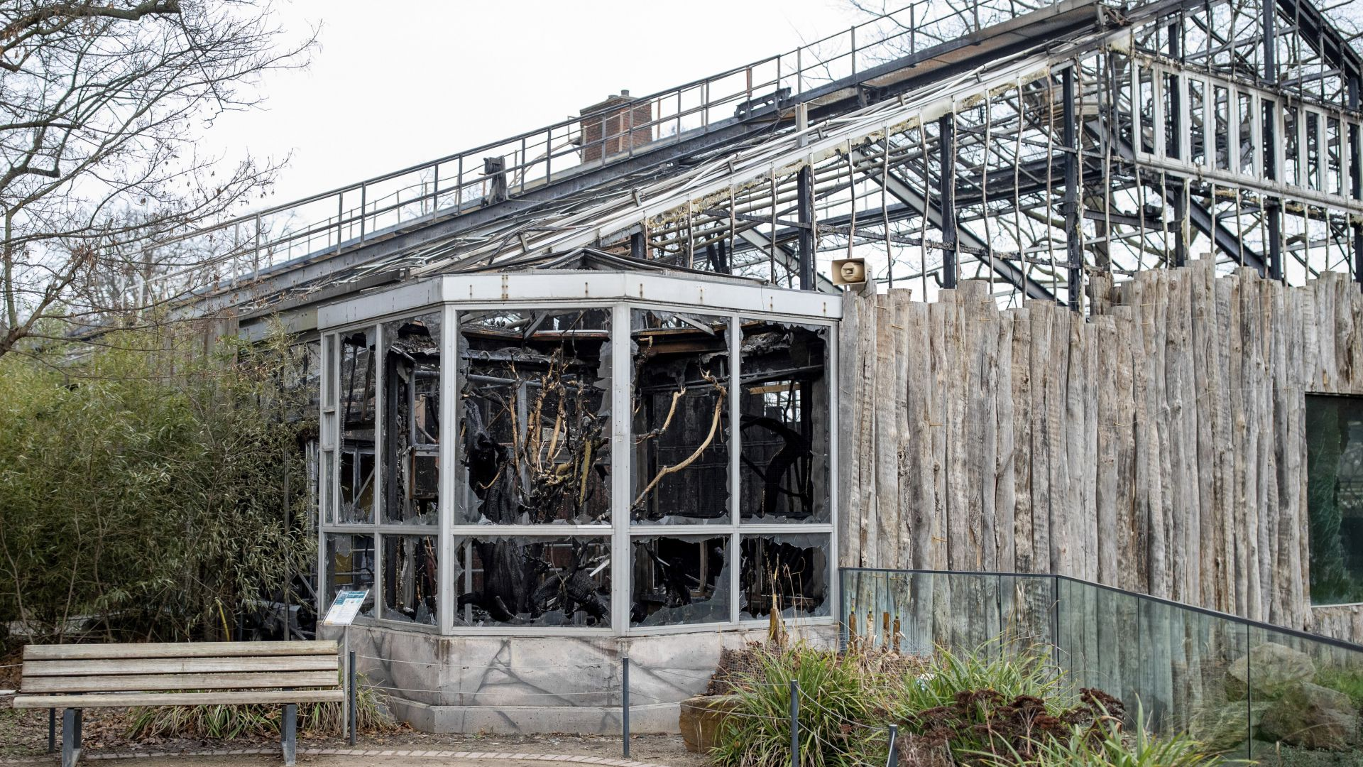 Майка и двете й дъщери причинили пожара в германския зоопарк