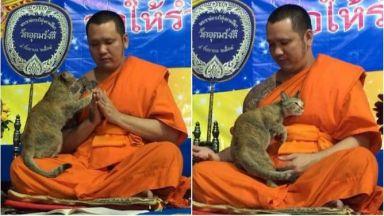 Котка подложи на изпитание тайландски монах (видео)