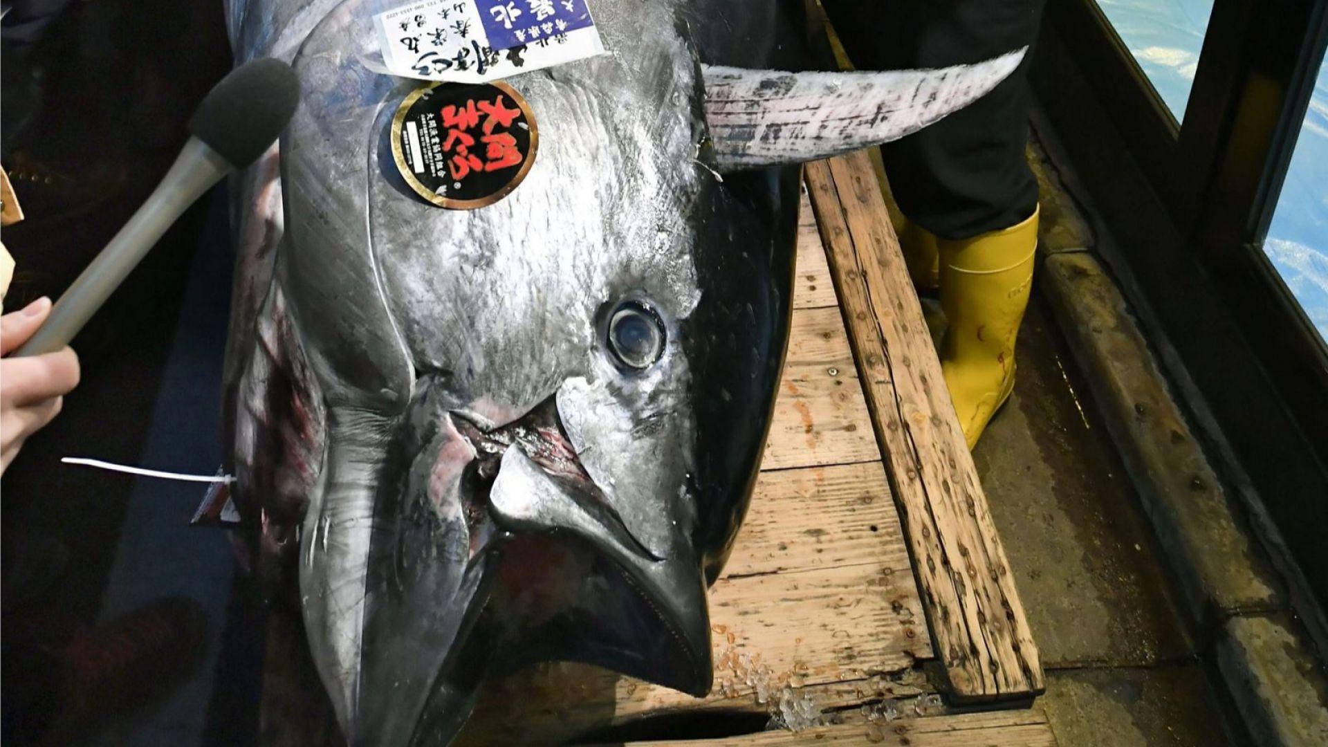 Риба тон беше продадена за $1,8 милиона в Токио