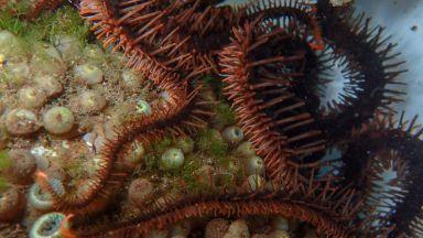 Морско създание вижда без да има очи