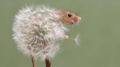За мишките, с любов