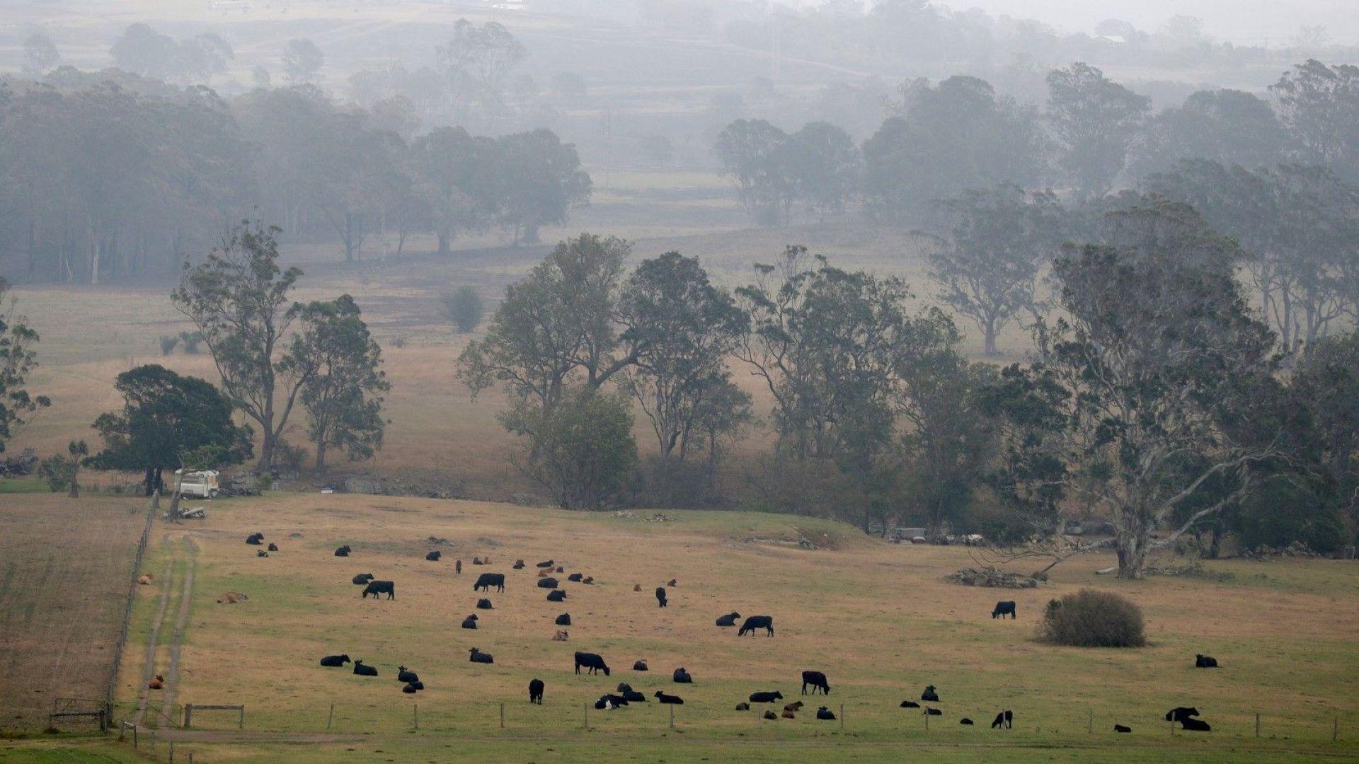 В цял свят се плетат одеяла  за засегнатите животни  от пожарите в Австралия