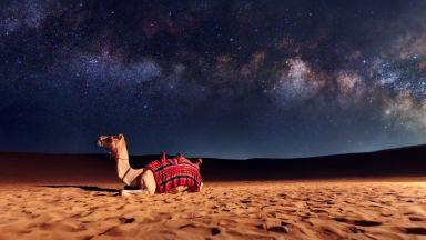 Избиват 10 000 камили - пиели прекалено много вода
