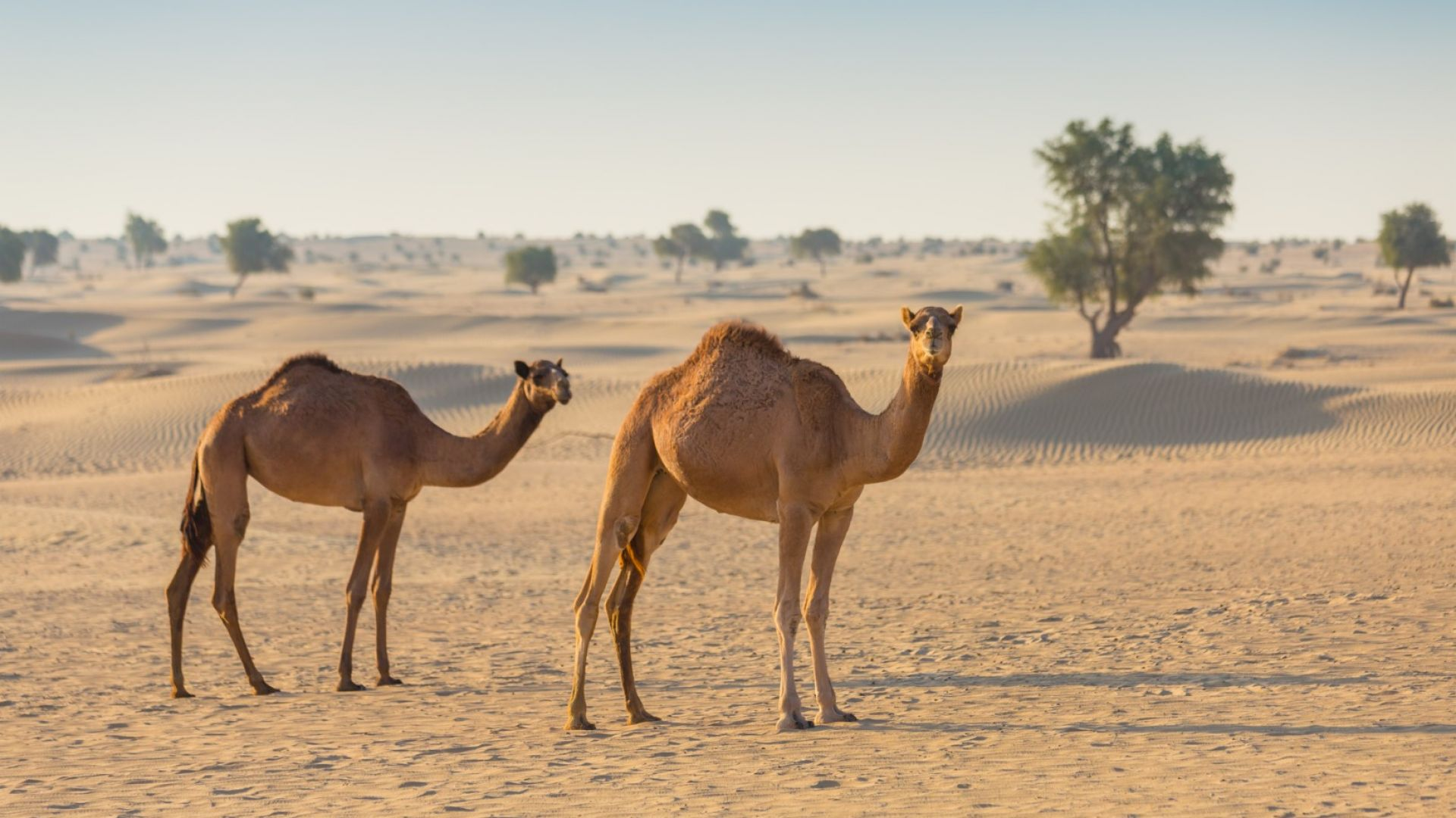 Изследване на ООН  съветва как да се  забави глобалното затопляне