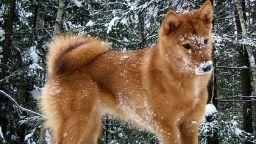 В Русия се появи нова порода кучета