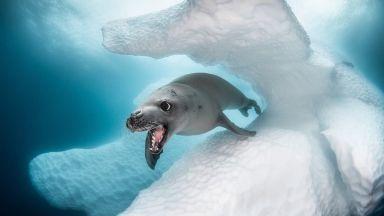 Ocean Art с нови удивителни подводни снимки на фотографи от 78 страни