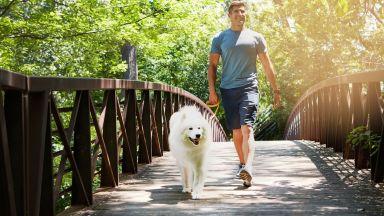 Дъвчене на дъвки и разходки с куче за здраво сърце