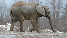 Слон избяга от цирк в Русия, за да се порадва на снега (видео)
