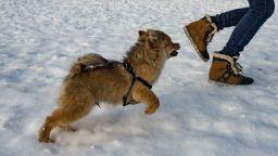 Сибирският антициклон отвоюва територията си - иде ли студен февруари?