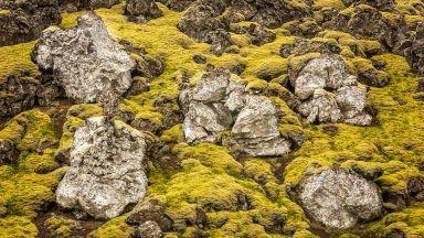 Исландия в  охра, зелено и жълто и море от спокойствие