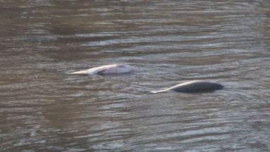Тонове умряла риба в Марица: Кога животът в реката ще се възстанови?