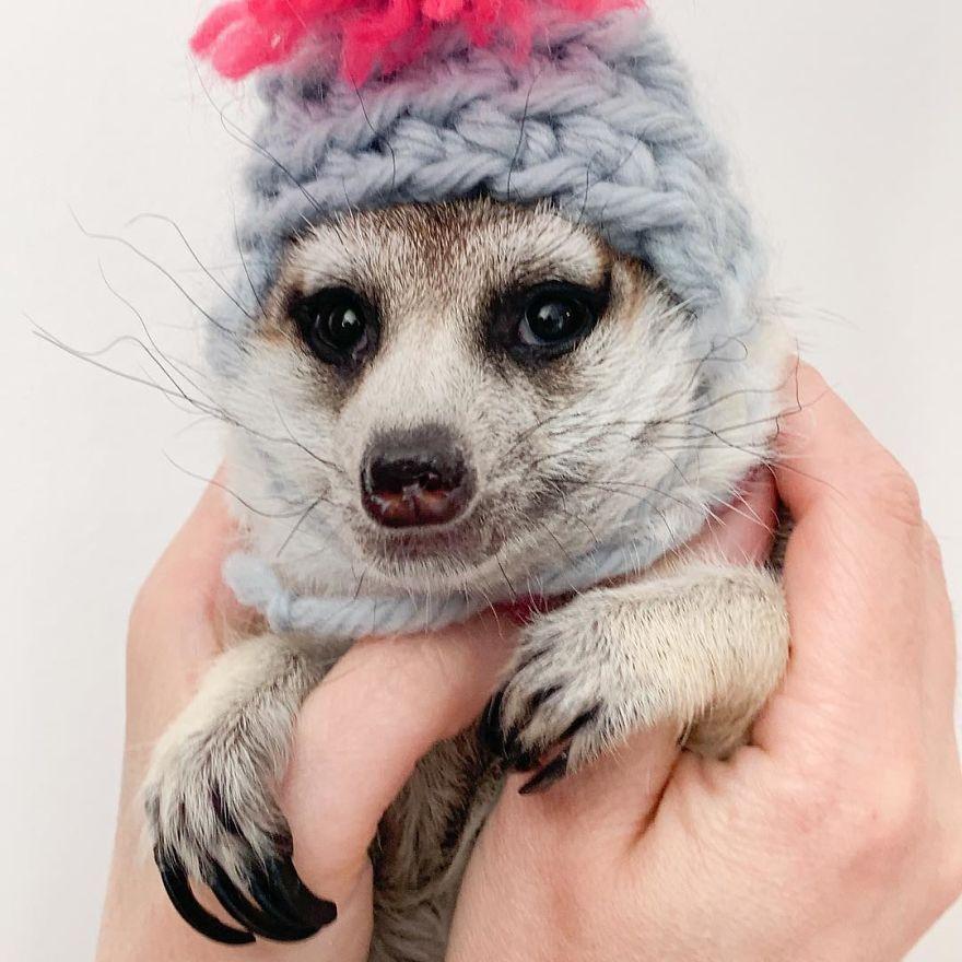 Суря е осиновена през 2012 от Екатерина от зоологическата градина в Москва