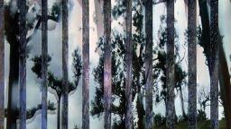 """Пресечете границата между вън и вътре с Пламена Рачева в изложбата й """"През щорите"""""""