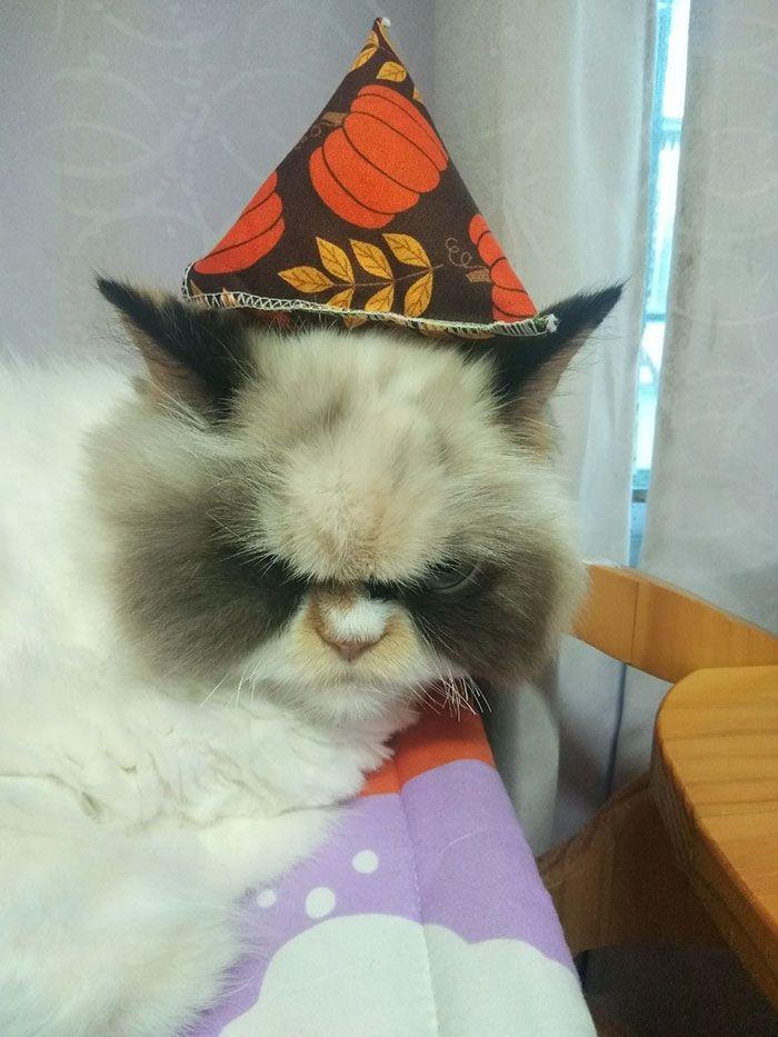 Обявиха я за достойна наследница на прочутата Сърдита котка, която почина миналия май