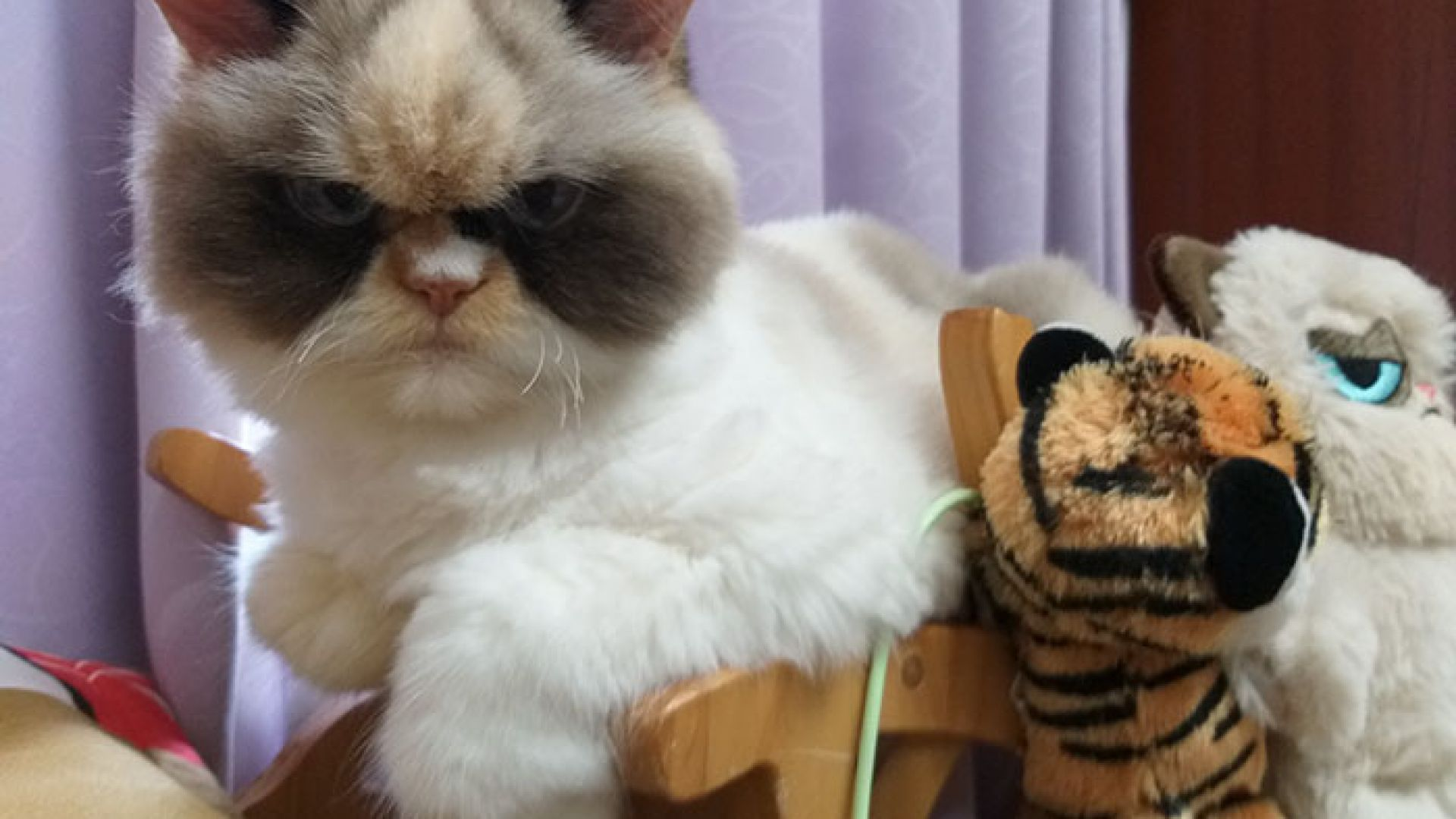 Мяу Мяу от Тайван наследи Сърдитата котка от Инстаграм