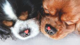 Кученца-валентинки за Деня на влюбените