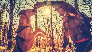 Мъжете глезят повече кучетата, отколкото приятелките си