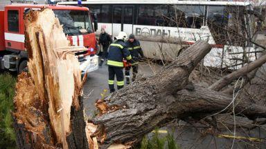 Силният вятър събори дървета, билборди и светофари във Варна