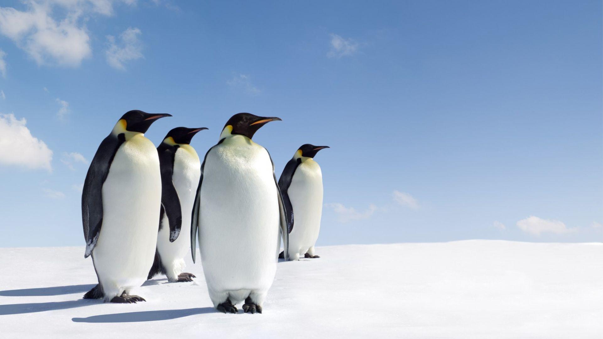 Антарктическият полуостров преживява най-топлата си година