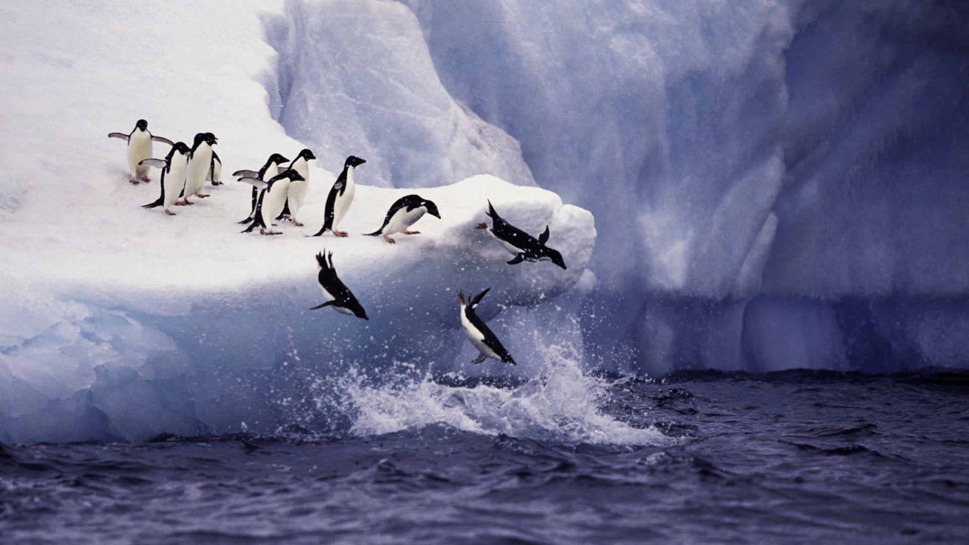 Рекордна температура от над 20 градуса в Антарктида