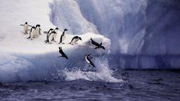 Първа топлинна вълна е регистрирана в Антарктида, съобщават учени