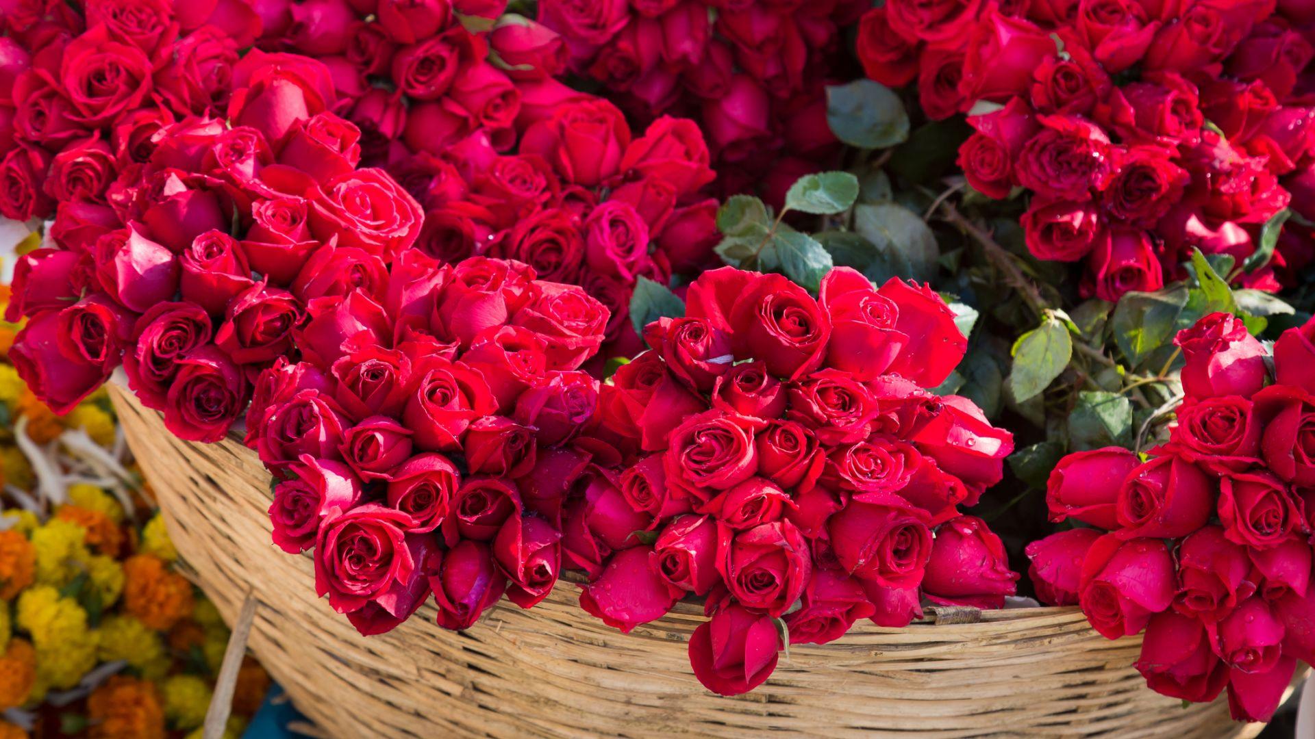Турция изнесе 60 милиона рози за Свети Валентин