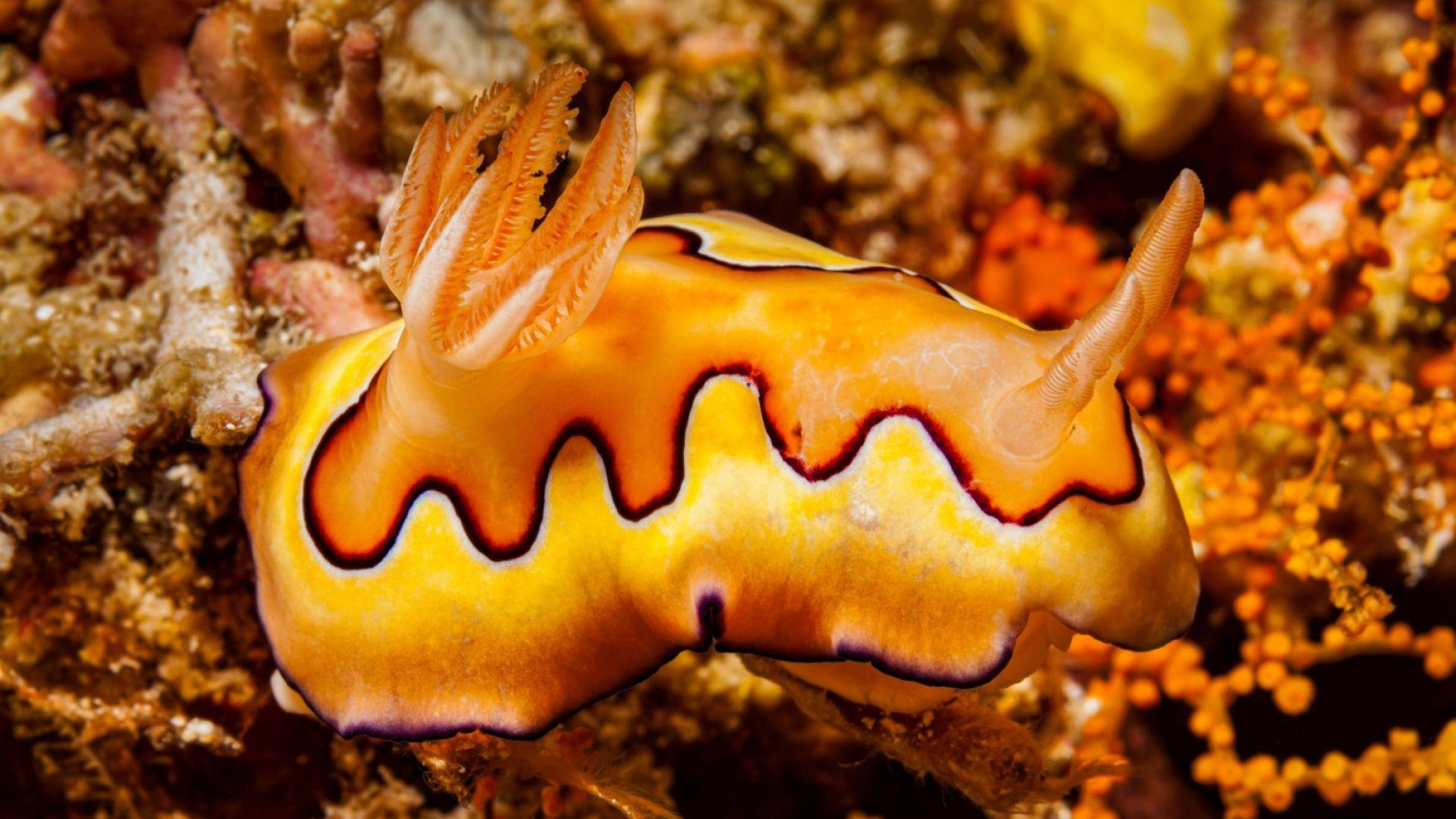 Заради затоплянето океаните са все по-кисели и рушат черупките на някои обитатели