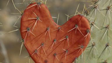 За любовта и други схеми