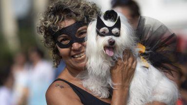 Маскирани кучета дефилираха в Рио преди карнавала (снимки)